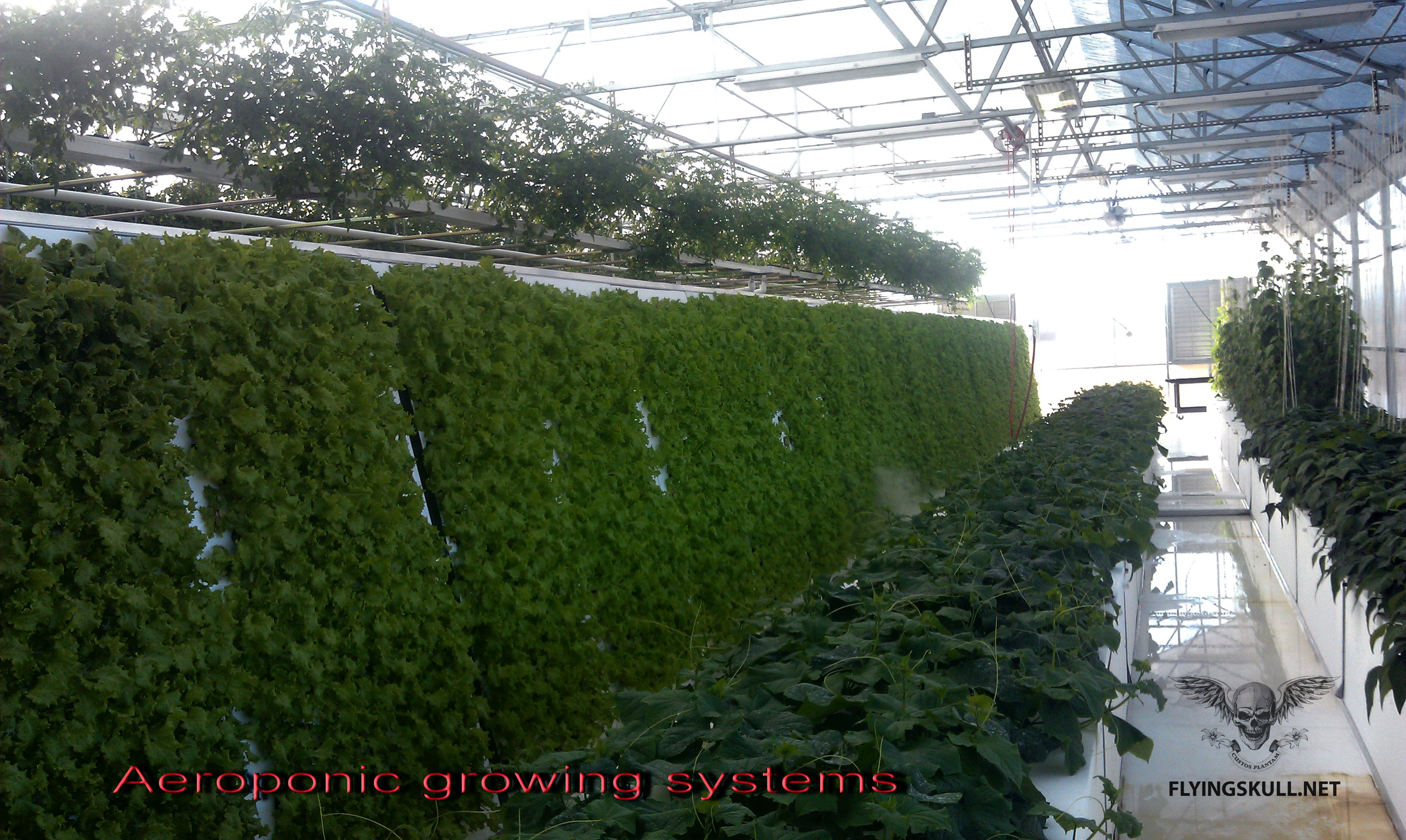 Z 7 Used In Commercial Greenhouse